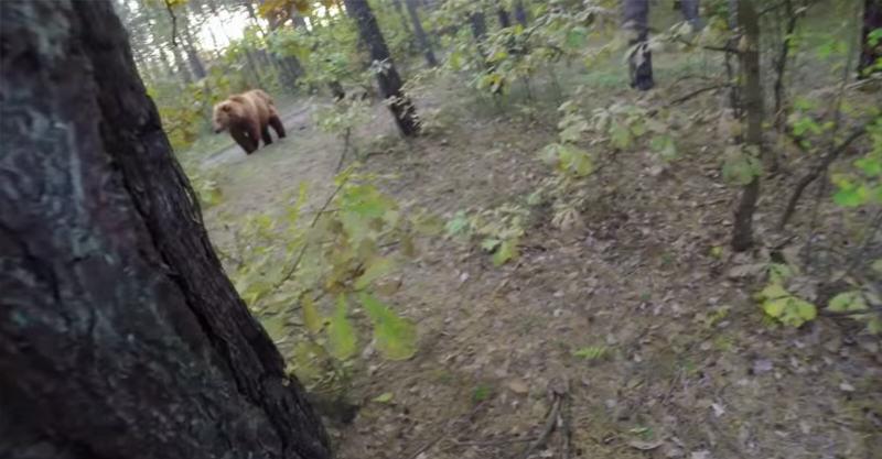 bjørnjakt